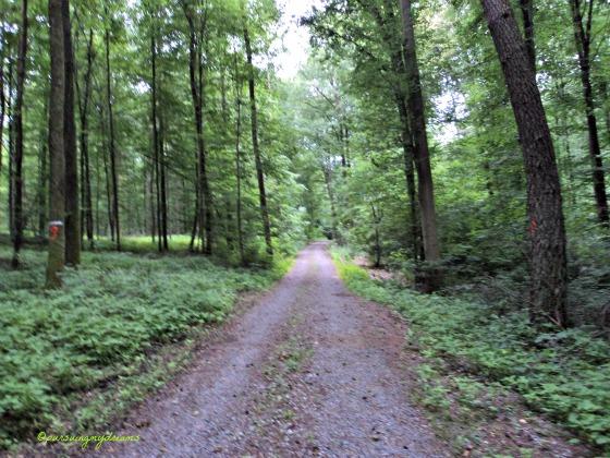 Jalan-jalan ke Hutan Yuk Melihat Hal yang Berbeda