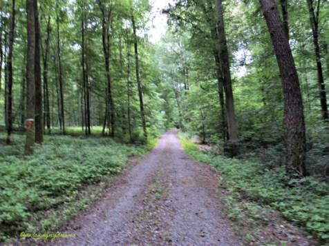 Kalau Cuaca Bagus Bisa Olahraga ke Hutan