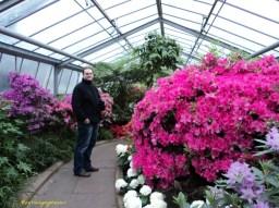 Foto 20. Akar Bunga Azalea dangkal dan hidup paling baik pada tanah asam yang subur di tempat yang agak teduh