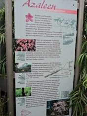 Azalea adalah Rhododendron