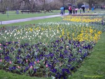 Hamparan Bunga Tulip Berbagai Warna. Wilhelma Stuttgart