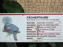 Informasi mengenai Burung Dara Mahkota