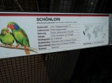 Papan Informasi Burung Lorikeet (Charmosyna placentis)
