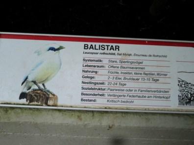 Informasi mengenai Burung Jalak. Balistar