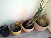 Koleksi Kaktus di Ruang Tamu
