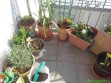 Searah Jarum Jam Lavendel, Pfauenlilien, Hosta, Gladiol, Dahlia Kuning, pot besar itu Park kaktus dahlia Pink