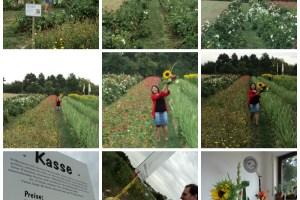 Ladang Bunga di Jerman