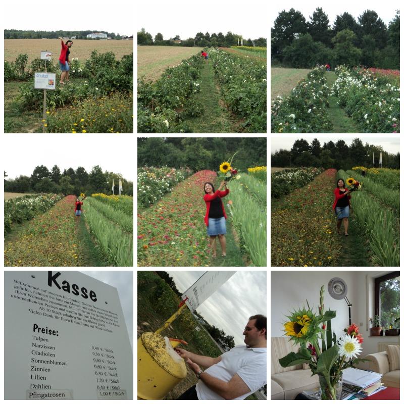 Beli Bunga ke Ladang Bunga. Agustus 2012