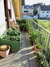 Tarrrraaa Inilah Taman di Balkon Belakang