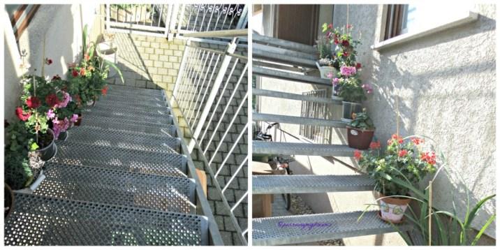Tanaman penghias tangga kerumah