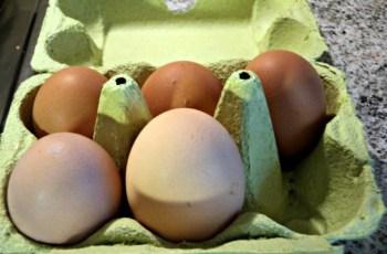telur kembar.