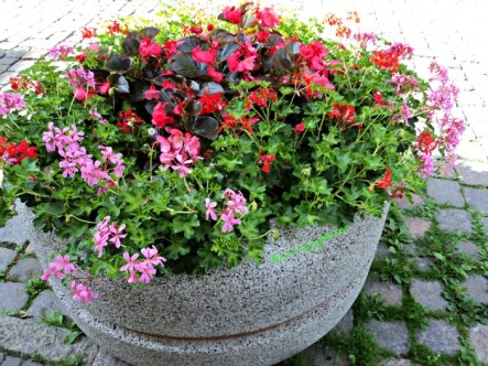 Kombinasi Bunga yang indah