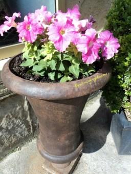 Cantiknya Petunia Pink dengan Pot antik