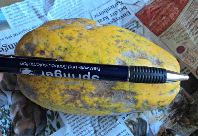 Pepaya asal brazil Berat 485 gram harganya superr mahal Rp. 32.000