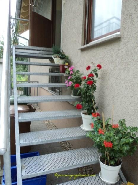 Tangga Ke rumahku berhiaskan Bunga-bunga Geranium
