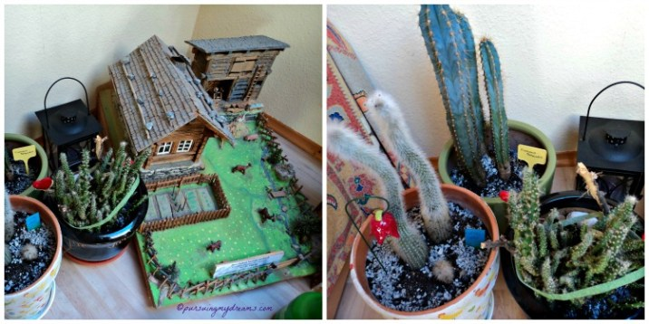 3 jenis Kaktus