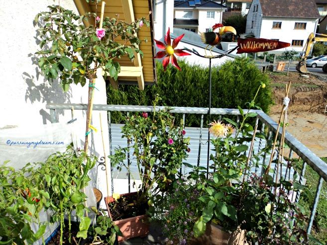 Kebunku di Balkon belakang