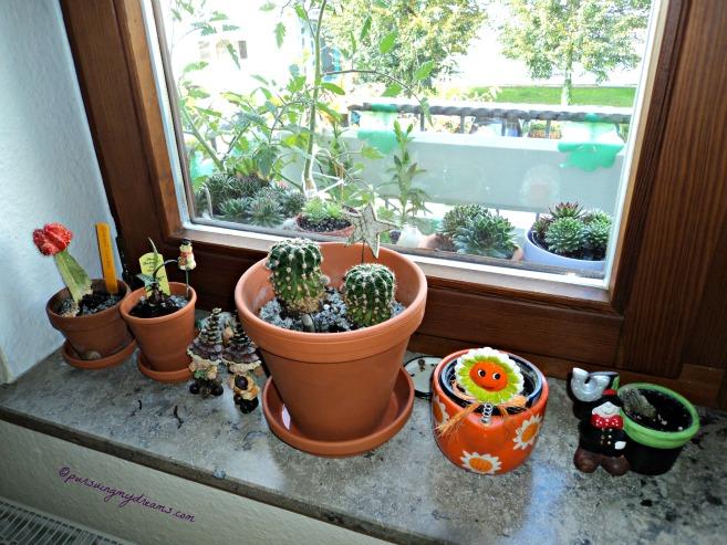 Kebunku di Musim Gugur. Di Jendela dapur ini hanya ada kaktus dan tanaman mini ga tau mungkin palem