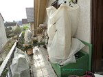 Sisi Lain Balkon Belakang sudah banyak tanaman kuselimuti