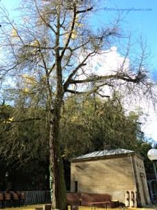 2 Minggu kemudian saya ke lokasi yang sama, daun-daun pohonnya sudah rontok. Bad Wimpfen 30.10.2013