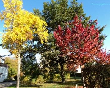 Warna dedaunan di musim gugur