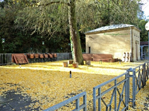 Yellow Autum leaves on the ground. Bad Wimpfen 30.10.2013