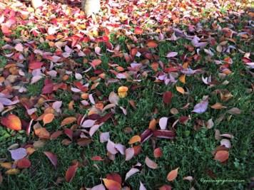 """""""Autumn is the hardest season"""