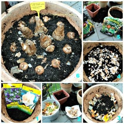 Tanamanku Subur Menggila karena.. Memanfaatkan sampah sayuran dan kulit telur. Kompos begini membuat tanaman jadi subur sekali