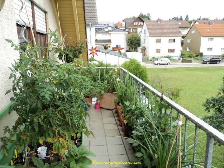 Pekerjaan Tukang Kebun ketika Musim Dingin. Sudut lain pemandangan tamanku di balkon belakang. Foto September 2013