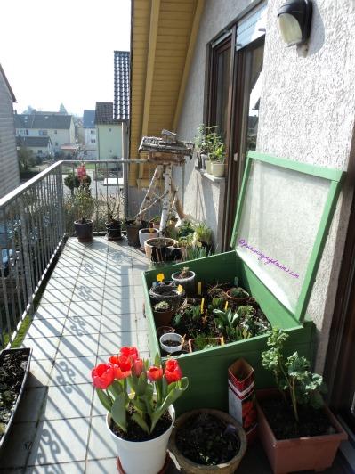 Musim semi di balkon. Sisi lain Balkonku.