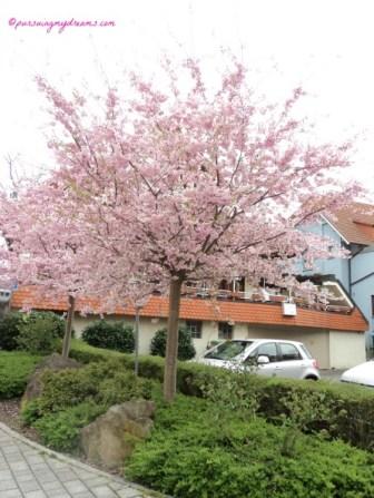 Frühling blossoms