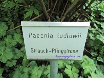 Plang Nama Bunga Peony. Taman Bad Rappenau