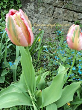 Cantik ya Kombinasi warna tulipnya