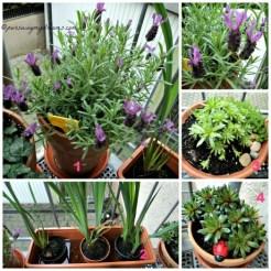 Tanaman-tanaman di Tangga masuk rumah