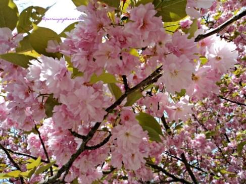Dibawah Pohon Sakura