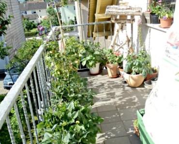 Pemandangan Balkon Belakang