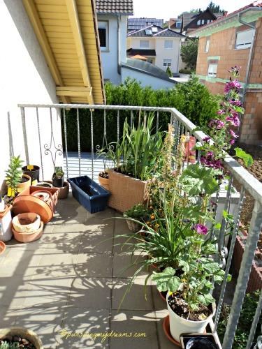 Sisi lain Balkon belakang. Walau suhunya 36 derajat C untungnya semua tanaman masih baik-baik saja