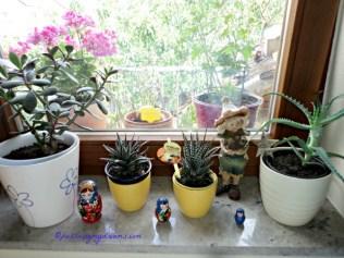 Tanaman dalam rumah, dijendela ruang tamu. Kalau bosan 2 bulan lagi ganti tanaman di ruang lain ke ruang tamu ini
