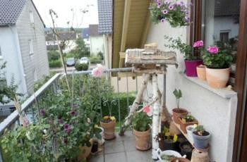 Bunga-bunga di Balkon belakang bulan Agustus ini