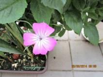 Ga tahu nama bunganya