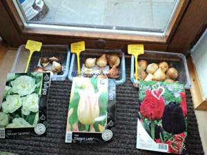 3 macam bibit tulip