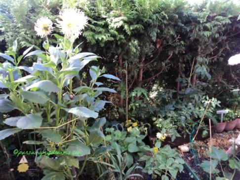 A garden is a grand teacher