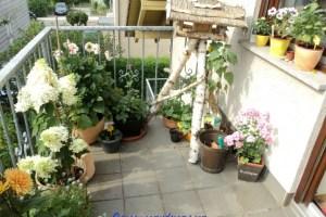 My balcony garden on summer 2013