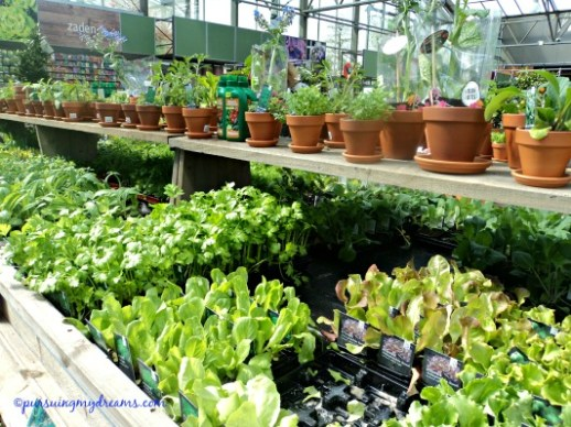 Macam-macam herbal dan salad