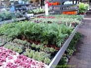 tanaman yang dijual garten center di Belanda