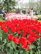 Siap-siap antri saat ingin berpose ditengah hamparan bunga di taman keukenof