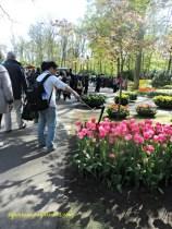 Untung si mas bawa tongsis jadi ga pegel mau foto zoom bunga tulip