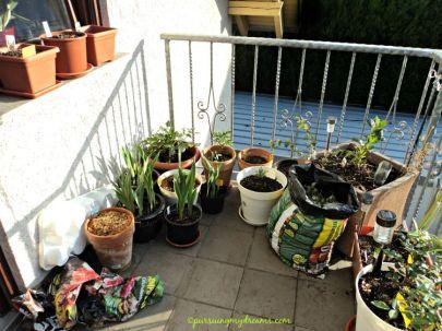 tanaman-tanamanku di balkon belakang