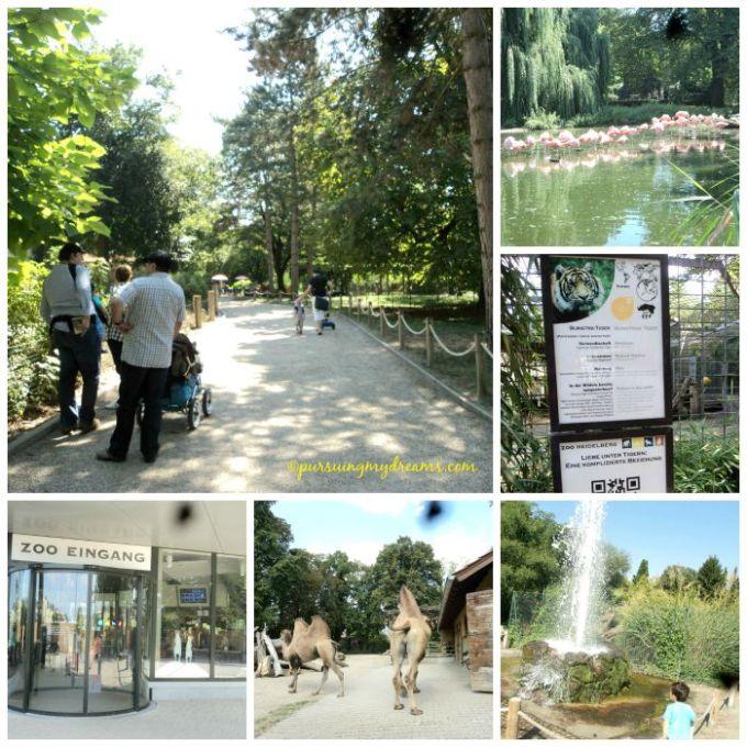 Jalan-jalan ke kebun binatang Heidelberg