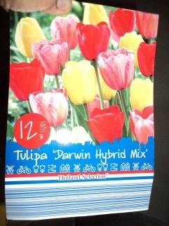 Tulip darwin hybrid mix